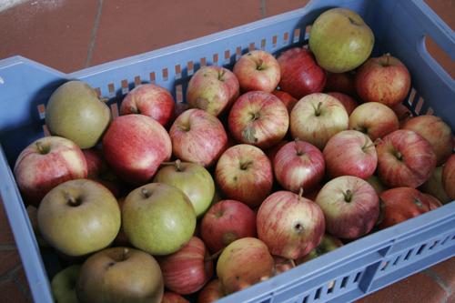 山の農家から有機リンゴが届きました_f0106597_18491497.jpg