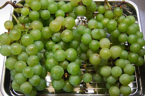 マスカットの収穫_c0124100_022844.jpg