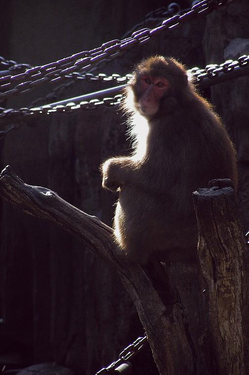 動物園にて 1