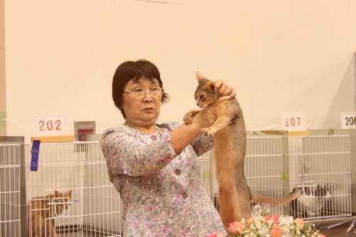 TICA&GCU cat show_e0033609_13133876.jpg