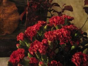 花盛りです。_c0102228_20511420.jpg