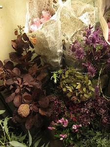 花盛りです。_c0102228_20513168.jpg