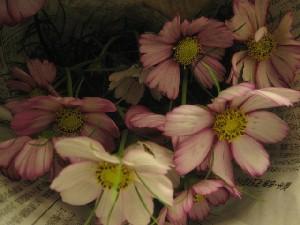 花盛りです。_c0102228_20514752.jpg