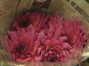 花盛りです。_c0102228_20515362.jpg