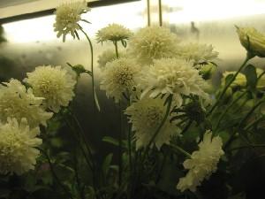 花盛りです。_c0102228_205272.jpg