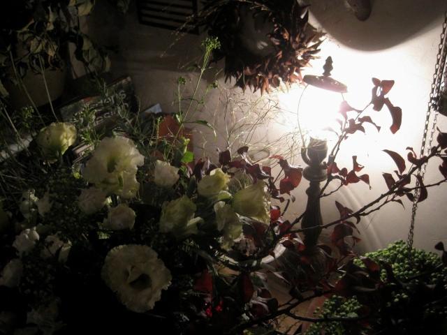 花盛りです。_c0102228_2057534.jpg