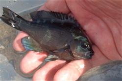 鷹巣漁港で魚釣り! 結果は・・・_f0165030_6434747.jpg