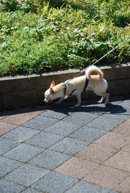 子犬のクラス 「お散歩」編_c0099133_10502270.jpg
