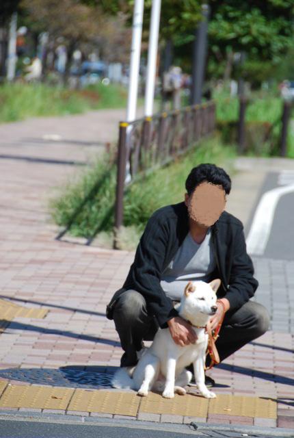 子犬のクラス 「お散歩」編_c0099133_10521718.jpg