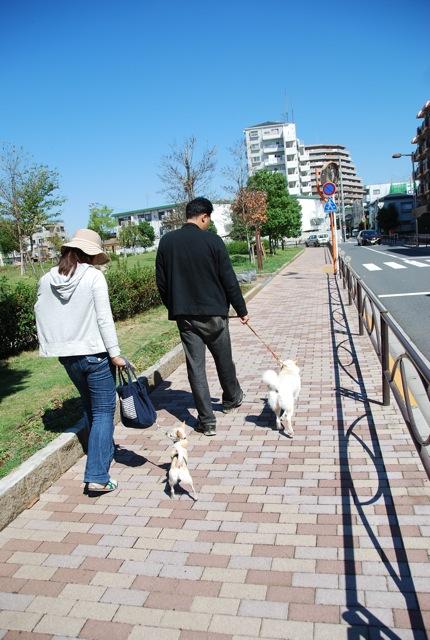 子犬のクラス 「お散歩」編_c0099133_8302810.jpg