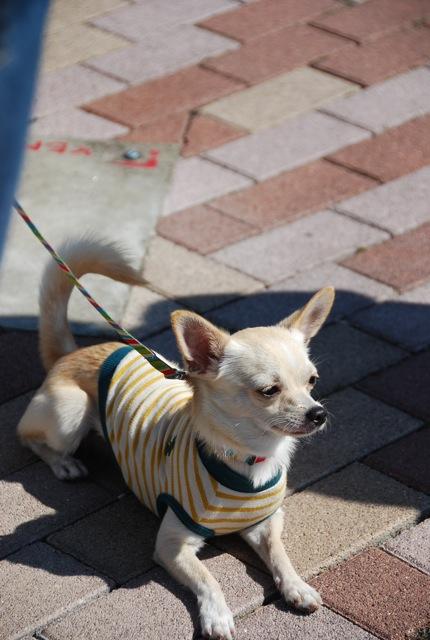 子犬のクラス 「お散歩」編_c0099133_8313791.jpg