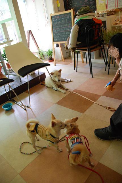 子犬のクラス 「お散歩」編_c0099133_841295.jpg