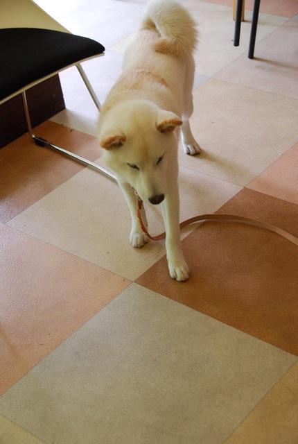 子犬のクラス 「お散歩」編_c0099133_8432878.jpg