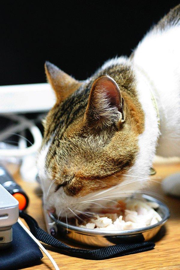 2代目Complex cat襲名_b0060239_223262.jpg