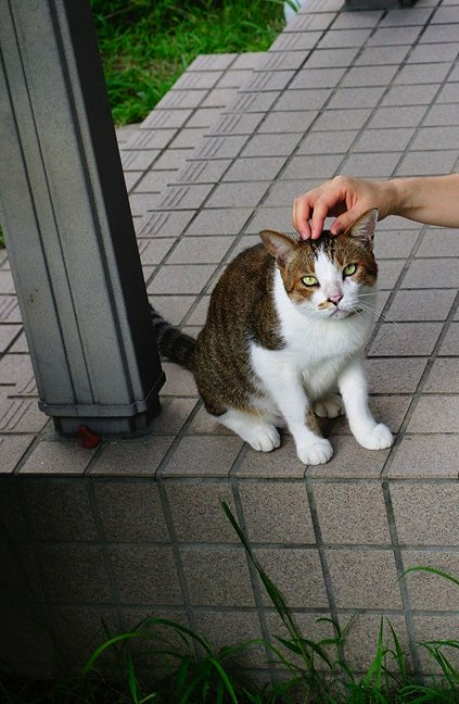 2代目Complex cat襲名_b0060239_2242196.jpg