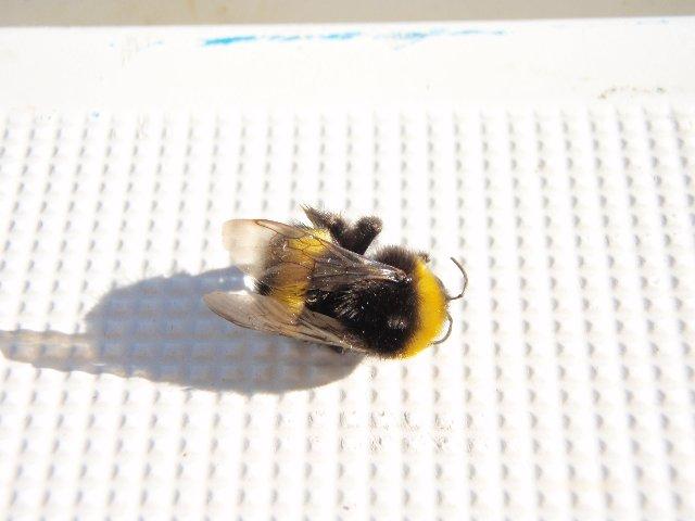 蜂に刺された アルメリマール 9月25日 : ハーモニー通信