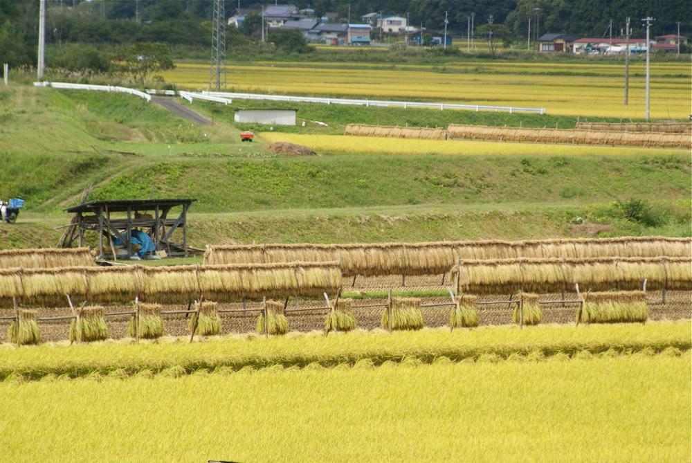 harvest_d0001843_23255950.jpg