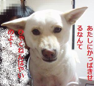 f0195543_231260.jpg