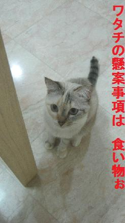 a0087146_10507.jpg