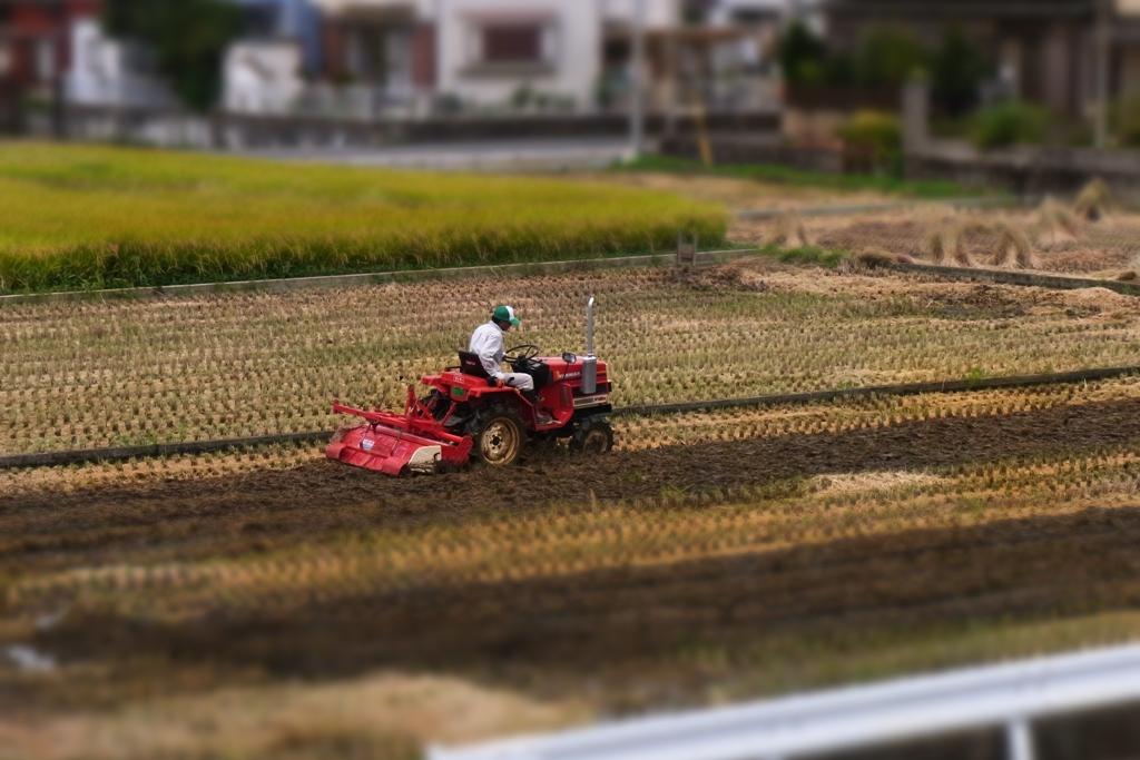 収穫の季節。_c0067646_6223014.jpg