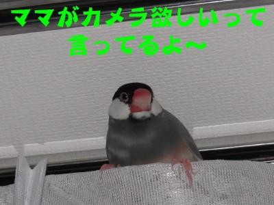 b0158061_20421053.jpg