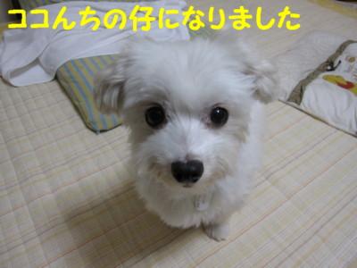 b0193480_14242438.jpg