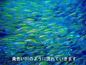 f0144385_22115428.jpg