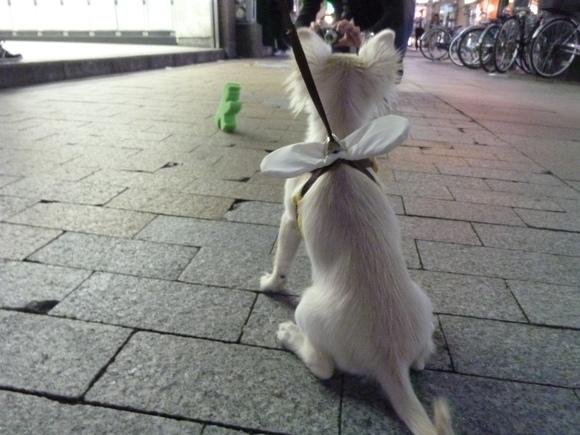 アンペルマン、東京を歩く。_c0180686_217759.jpg