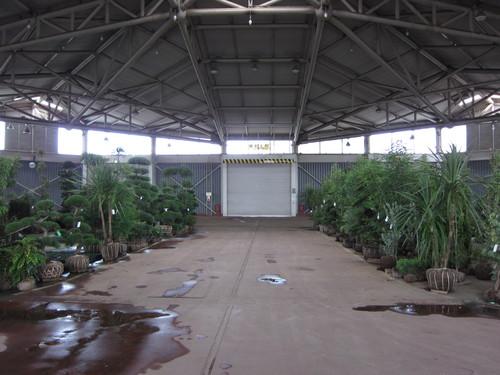 安行植物取引所_b0200291_14265981.jpg