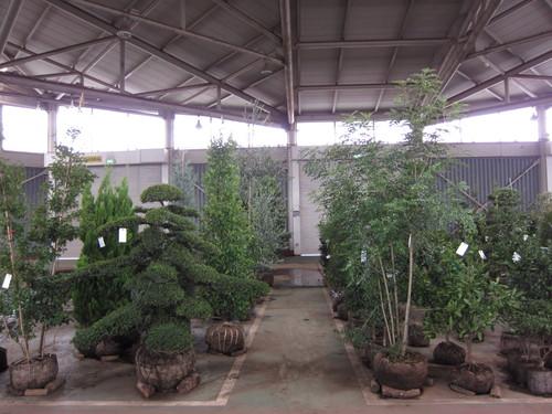 安行植物取引所_b0200291_1434133.jpg