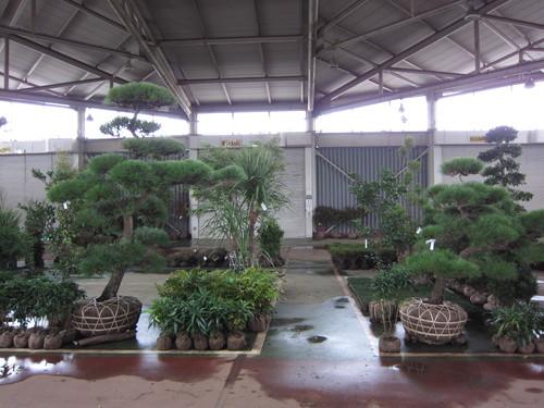 安行植物取引所_b0200291_14353355.jpg