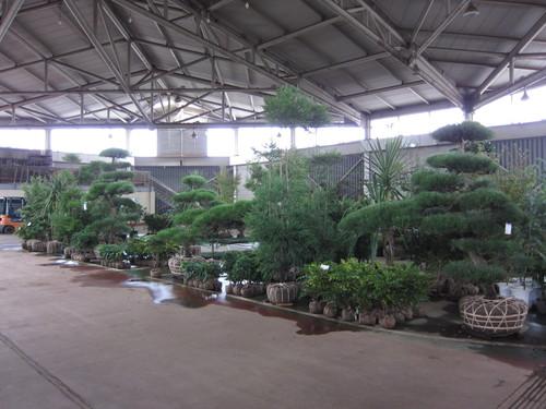 安行植物取引所_b0200291_14391043.jpg