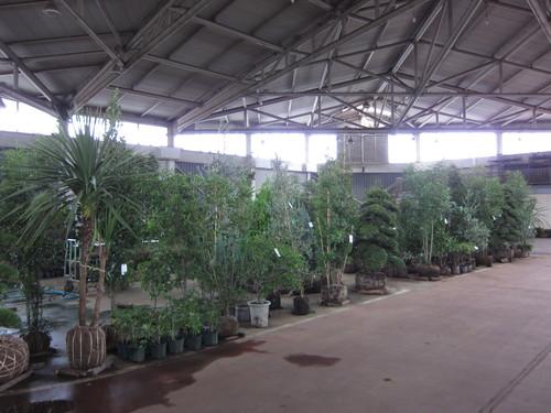 安行植物取引所_b0200291_14411011.jpg