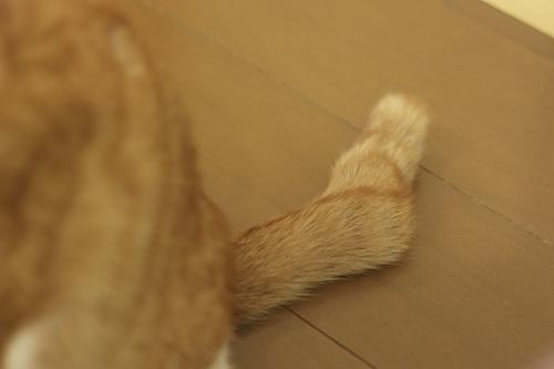 澪っちの尻尾