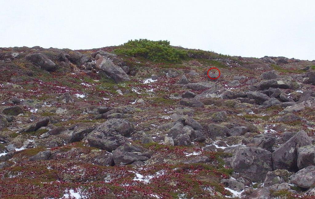 9月25日、ニペソツ山-その2-_f0138096_1147131.jpg
