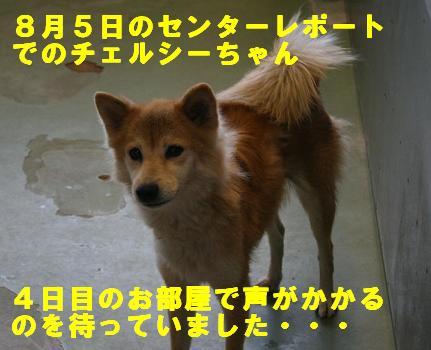 チェルシーちゃんのこと_f0121712_1310761.jpg