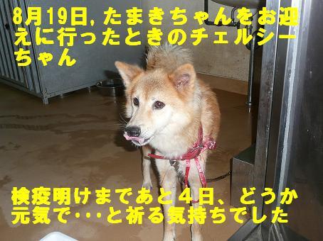チェルシーちゃんのこと_f0121712_1316848.jpg