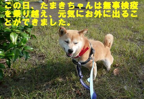 チェルシーちゃんのこと_f0121712_13235913.jpg