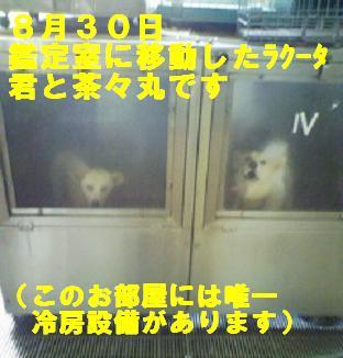 チェルシーちゃんのこと_f0121712_1355392.jpg