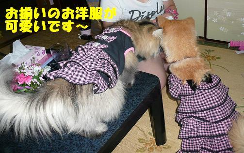 チェルシーちゃんのこと_f0121712_14122241.jpg