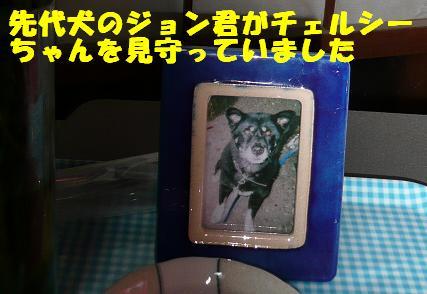 チェルシーちゃんのこと_f0121712_14282153.jpg