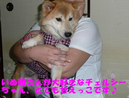 チェルシーちゃんのこと_f0121712_1445897.jpg