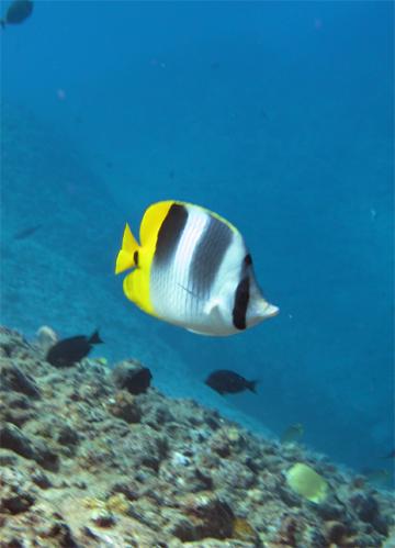 9月28日透明度の良い海♪_c0070933_2137652.jpg