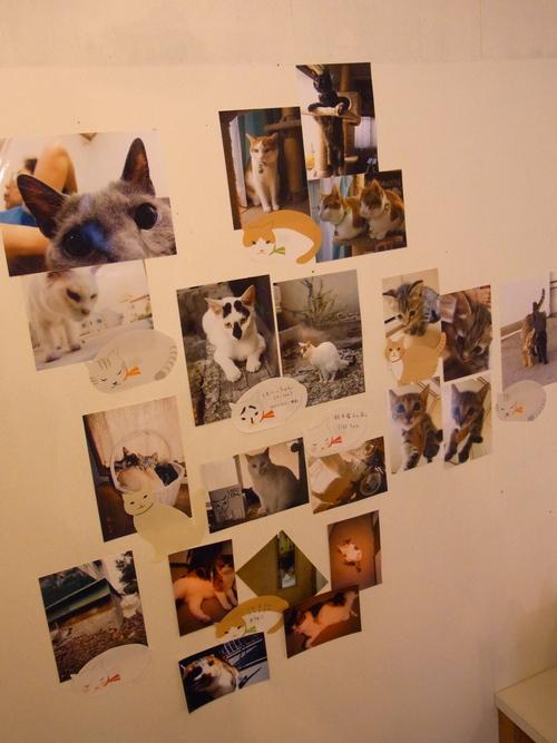野良猫八ちゃん展 開催中。_d0131137_1021191.jpg