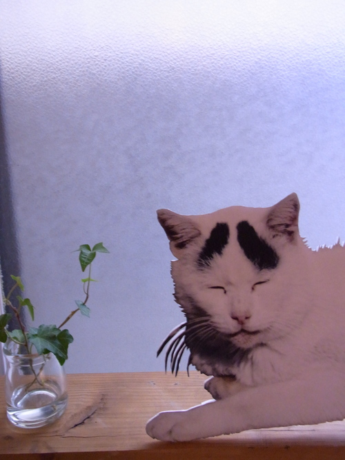 野良猫八ちゃん展 開催中。_d0131137_952661.jpg