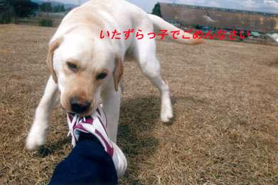 b0198051_09341.jpg
