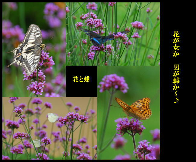 c0094572_1115714.jpg