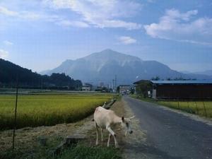 ■ベタな田舎の風景_a0157274_12225888.jpg