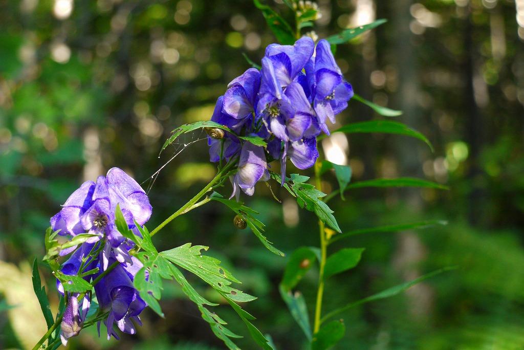 青葉公園の花など_f0138096_16432173.jpg