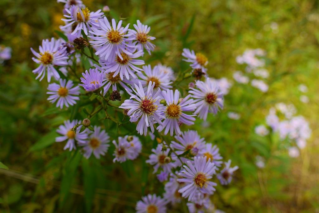 青葉公園の花など_f0138096_16433633.jpg